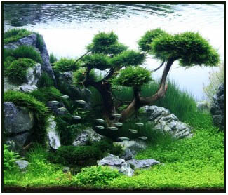 Top 10 Aquascaping Tips From Marineandreef Com